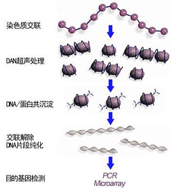 chip染色质免疫共沉淀实验服务案例介绍